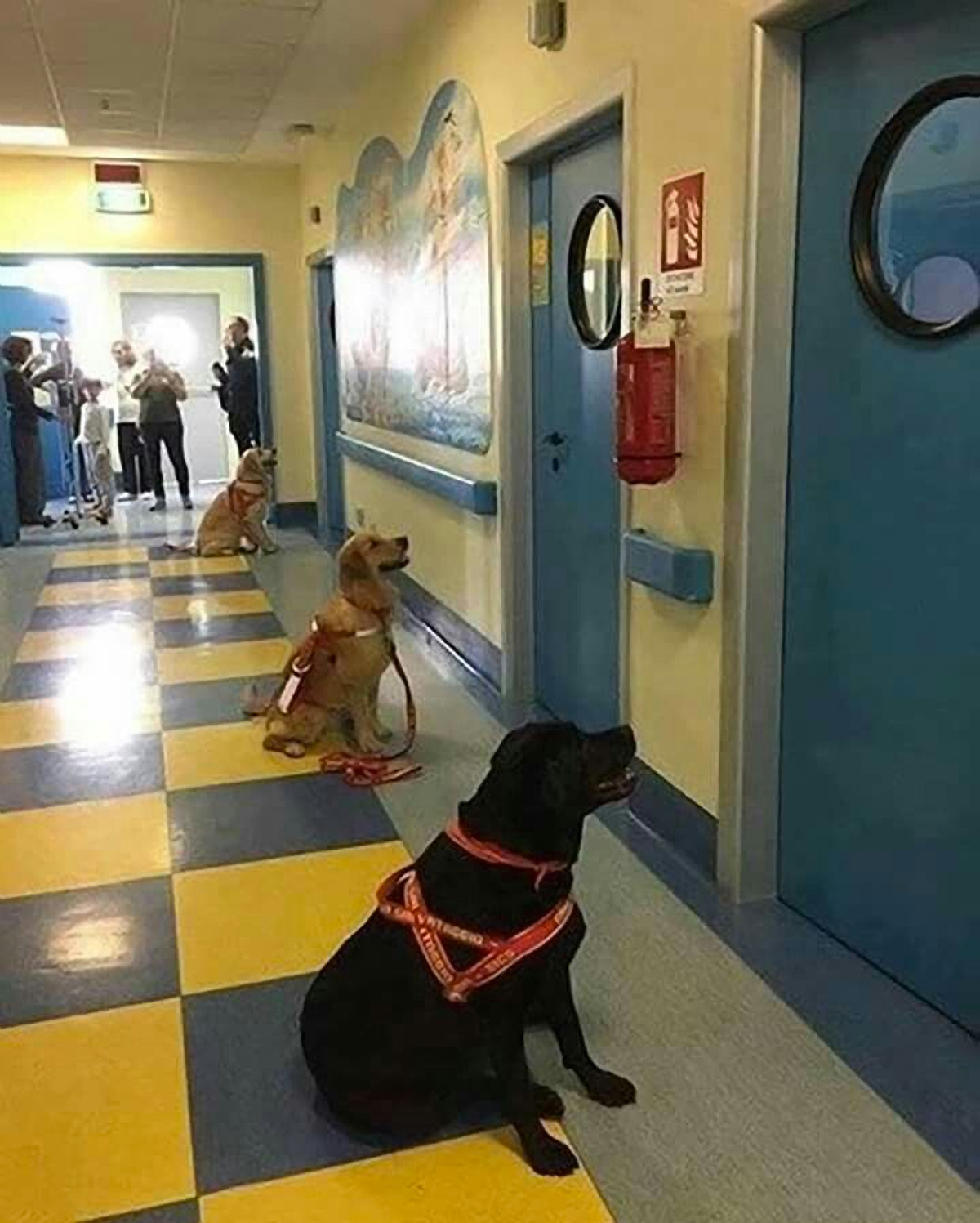 Therapy Dogs Lined Up for Work